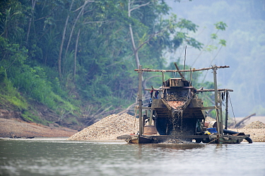 Panning for Gold on the Madre de Dios River in the Peruvian Amazon. The river has the highest levels of mercury pollution of any river worldwide due to the gold mining industry along its banks, Septem...