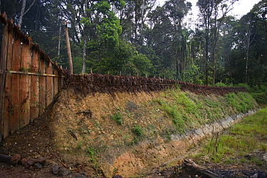 Fortification, moat and stakes around habitation in Tari Valley, Southern Highlands, Papua New Guinea