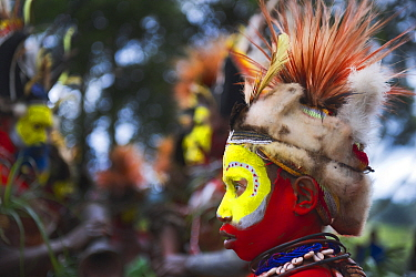 Huli Wigmen from the Tari Valley in the Southern Highlands, Papua New Guinea at a Sing-sing, Mount Hagen Papua, New Guinea. Wearing bird of paradise feathers and plumes particularly Raggiana Bird of P...