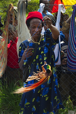 Lady in market with male Raggiana Bird of Paradise (Paradisea raggiana) for sale, Mount Hagen, Papua New Guinea, August 2011