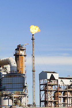 Flaring off gas at The Ineos oil refinery at Grangemouth in the Firth of Forth, Scotland, UK. October 2010.