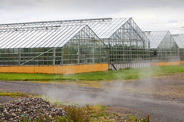 Greenhouses growing tomatoes heated by geothermal hot water near Husafell in Iceland. September 2010.