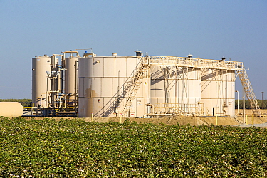 Fracking site  next to a farmers Cotton crop, near Wasco in California's Central Valley, USA, September 2014.