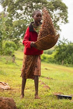 Girl winnowing beans, Kenya, August 2017.