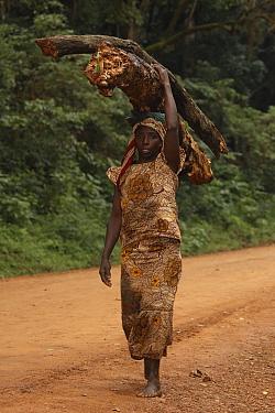 Luhya woman carrying firewood, Kakamega forest, Kenya, Africa