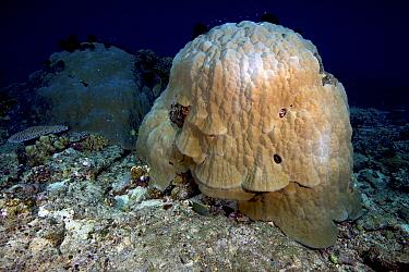 Large coral structure, Bismarck Sea, Vitu Islands, West New Britain, Papua New Guinea