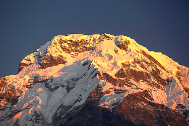 Alpenglow at sunrise on Annapurna South, Nepelese Himalayas, Nepal, December 2012.