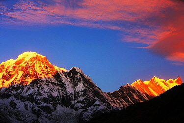 Alpenglow at sunrise on Annapurna South and Annapurna Fang, Nepal. December 2012.