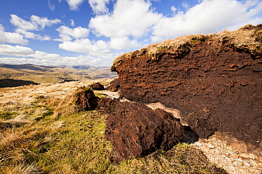 Peat hags near Loadpot Hill above Ullswater in the Lake District, UK. Peat bogs are a great carbon sink, as the sequestrate large amounts of carbon. They are also great natural sponges that are import...