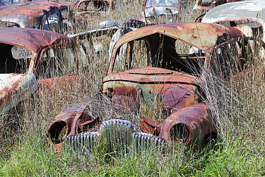 Flynns wrecking yard with cars going back to the 1920's, near Cooma in New South Wales, Australia. February 2010.