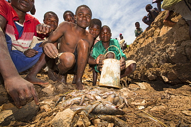 Children gathering fish, left behind by January 2015 flooding, in a hole in damaged bridge near Phalombe. Malawi, March 2015.