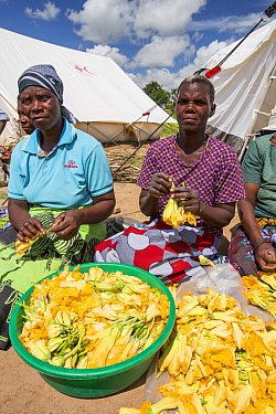 People displaced by the January 2015 flooding, preparing pumpkin flowers to eat, in Baani refugee camp near Phalombe, Malawi, March 2015.