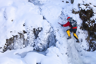 Mountaineer, Mike Withers ice climbing in Fisher Place gill above Thilrmere, Lake District, UK. This waterfall very rarely comes into climbable condition, but did in January 2010.