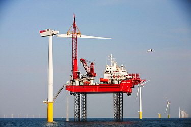 The Krakken, a jack up barge, constructing wind turbines of the Walney offshore wind farm, uses a specialist cradle to lift a turbine blade into place. Cumbria, England, UK. September 2011