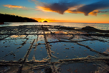 Tessellated pavement at sunset. Eagle Hawk Neck, Tasmania, Australia. Tasman Sea