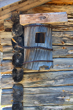 Old Goldeneye Nestbox crafted from a log and chained to the side of a lodge to protect it from Wolverines. Kaalimaa, Pokka, Inari, Lapland, Finland, June.