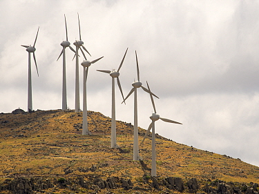 Wind farm above Eressos on Lesvos, Greece. June 2013