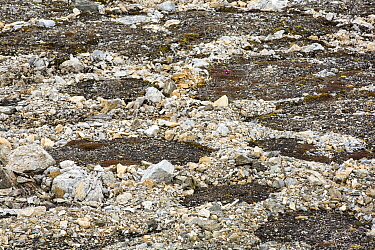 Patterned ground and stone circles formed above permafrost in the high Arctic on Spitsbergen, Svalbard. The patterns are formed by frost heave and freeze thaw cycles which pushed the large rocks out f...