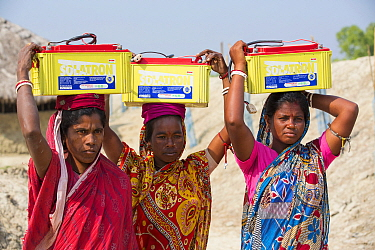 Women collecting solar charged batteries from  WWF project to supply electricity to a remote island in the Sunderbans, Ganges Delta, India. December 2013
