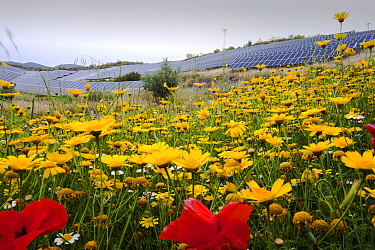 Wildflowers and a photo voltaic solar power station near Lucainena de las Torres, Andalucia, Spain. May 2011