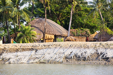 Coastal flood defences in the Sunderbans, a low lying area of the Ganges Delta in Eastern India, that is very vulnerable to sea level rise. The houses behind the embankment are lower than the high tid...