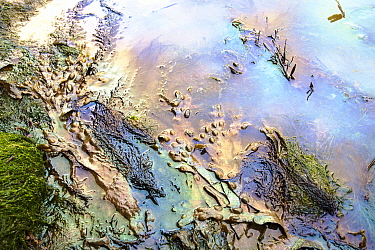 Oil pollution in Lyme Regis harbour, probably from a fishing vessel, Dorset, UK. June 2012