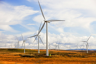 Whitlee wind farm on Eaglesham Moor just south of Glasgow in Scotland, UK, is Europes largest onshore wind farm with 140 turbines and an installed capacity of 322 MW, enough energy to power 180,000 ho...