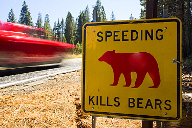 Speed kills bears sign in Yosemite National Park, each sign marks a spot where a bear has been killed by traffic, California, USA. October 2014