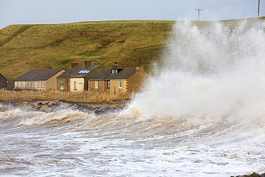 Waves crashing off Parton near Whitehaven during the January 2014 period of storm surge, high tides and storm force winds. The coastline took a battering, damaging the harbour wall and eroding a large...