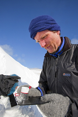Member of the Scottish Avalanche Information Service looks at snow crystals to help assess avalanche risk on  Cairngorm in the Cairngorm National Park, Scotland, UK. March 2009