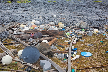 Marine litter - mostly shoes  (flip flops) and plastic bottles washed up on shore with Aldabra giant tortoise (Aldabrachelys gigantea). Cinq Cases, Aldabra Island, Indian Ocean