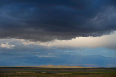 Storm rising over the steppe, Daurian Nature Reserve near Russia's border with Mongolia. Daurian Steppes UNESCO World Heritage Site. June 2016.