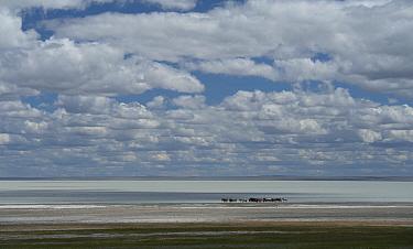 Lake Barun-Torey, Daurian Nature Reserve. Daurian Steppes UNESCO World Heritage Site, Zabaykalsky Krai, Siberia, Russia, June 2016.