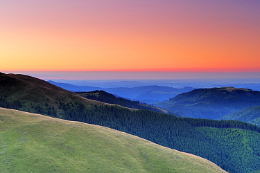 Leota mountain range and forests, seen from alpine grasslands, at dawn, Arges County, Carpathian Mountains, Romania, August, 2011