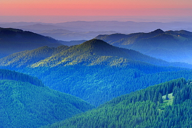 View of forest areas of the Leota Mountain range at dawn, Arges county, Carpathian Mountains, Romania, August, 2011