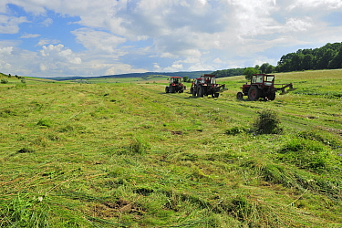 Tractors cutting grass for hay, Cobor, Brasov, Carpathian Mountains, Romania, August, 2011