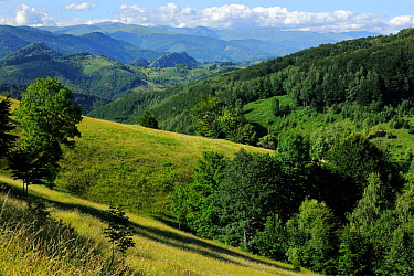 Domogled National Park, Southern Carpathians, Rewilding Europe site, Romania, June 2011