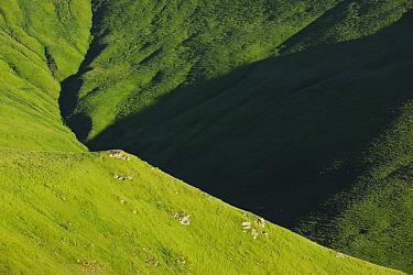 Alpine grasslands in the Tarku mountains Natura 2000 site, Southern Carpathians, Rewilding Europe site, Romania, June 2011