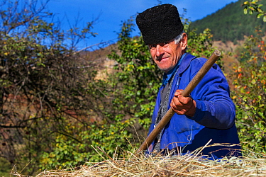 Farmer sitting on a horse carriage loaded with hay in the village of Isverna. Geoparcul Platoul Mehedinti, Romania, October 2012