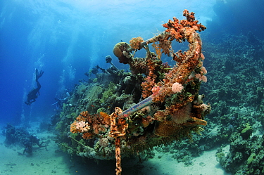 Wreck of a yacht colonised by soft corals, with divers Abu Galawa Soghayr, Fury Shoal, Egypt, Southern Red Sea.
