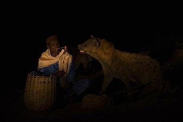 Man feeding Spotted hyenas (Crocuta crocuta) at night, Harar, Ethiopia, December 2017.