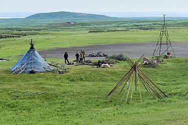 Nenet reindeer herders settign up camp, Nenets Autonomous Okrug, Arctic, Russia, July 2017.