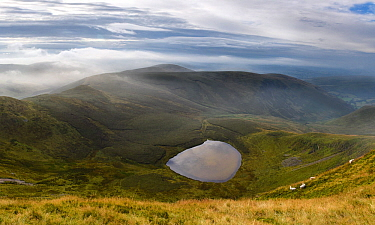 Vew of Llyn Lluncaws taken from Moel Sych in the Berwyn Mountains, Powys, Wales, UK August. This is a glacial Cwm, Corrie or Tarn.