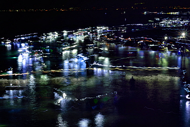 Local fisherman catching the bioluminescent Firefly squid (Watasenia scintillans) along the shore of Toyama Bay, Japan. April 2017.