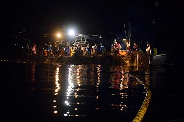 Fisherman hauling up glowing nets of florescent  Firefly Squid (Watasenia scintillans) at night.  Toyama Bay, Namerikawa, Japan, May.