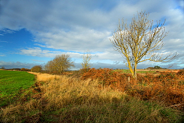 Field margins which support a broad range of invertebrate, reptile and mammal species. Devon, England, UK, November.