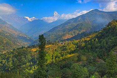 The mountain village of Ghandruk in the Modi Khola Valley at around 2000 metres, Annapurna and Machapuchare the distance, Nepal. November 2014.