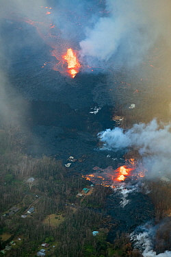 Lava emanating from Pu'u O'o, Kilauea Volcano, erupting from multiple fissures in Leilani Estates, near Pahoa, Puna, Hawaii. The fissure in the lower part of the frame is Fissure 8, which became the d...
