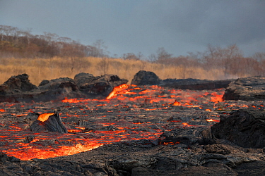 River of lava erupting from fissure 8 of the Kilauea Volcano, near Pahoa, flowing through Kapoho, Puna District, Hawaii June 2018.
