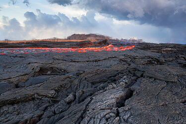 Lava erupting from fissure 8 of the Kilauea Volcano, near Pahoa, flowing through what was formerly a papaya orchard in Kapoho, lower Puna District, Hawaii. June 2018.
